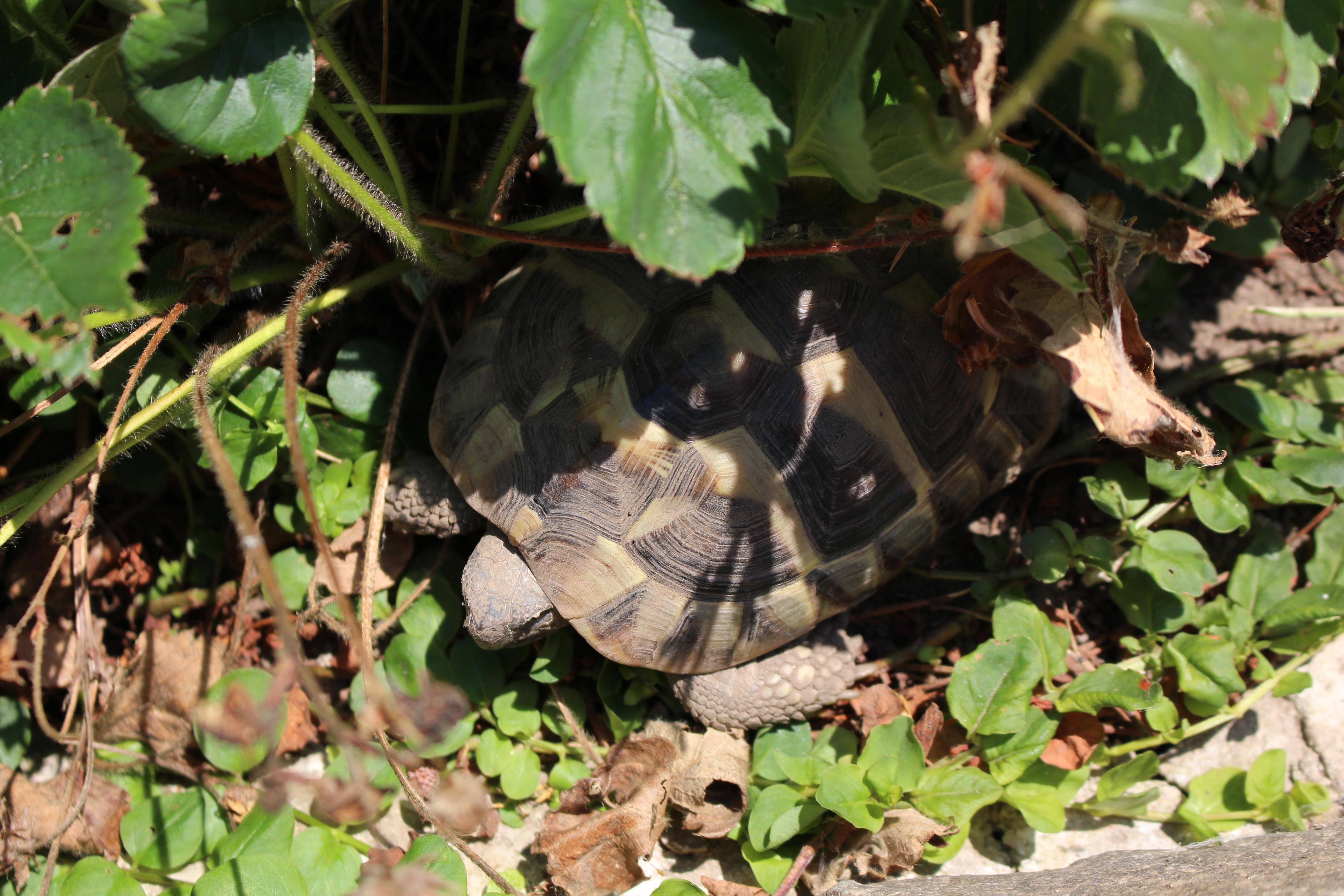 11) Schildkröten sind Einzelgänger, darum habe ich nur eine - Patty ...