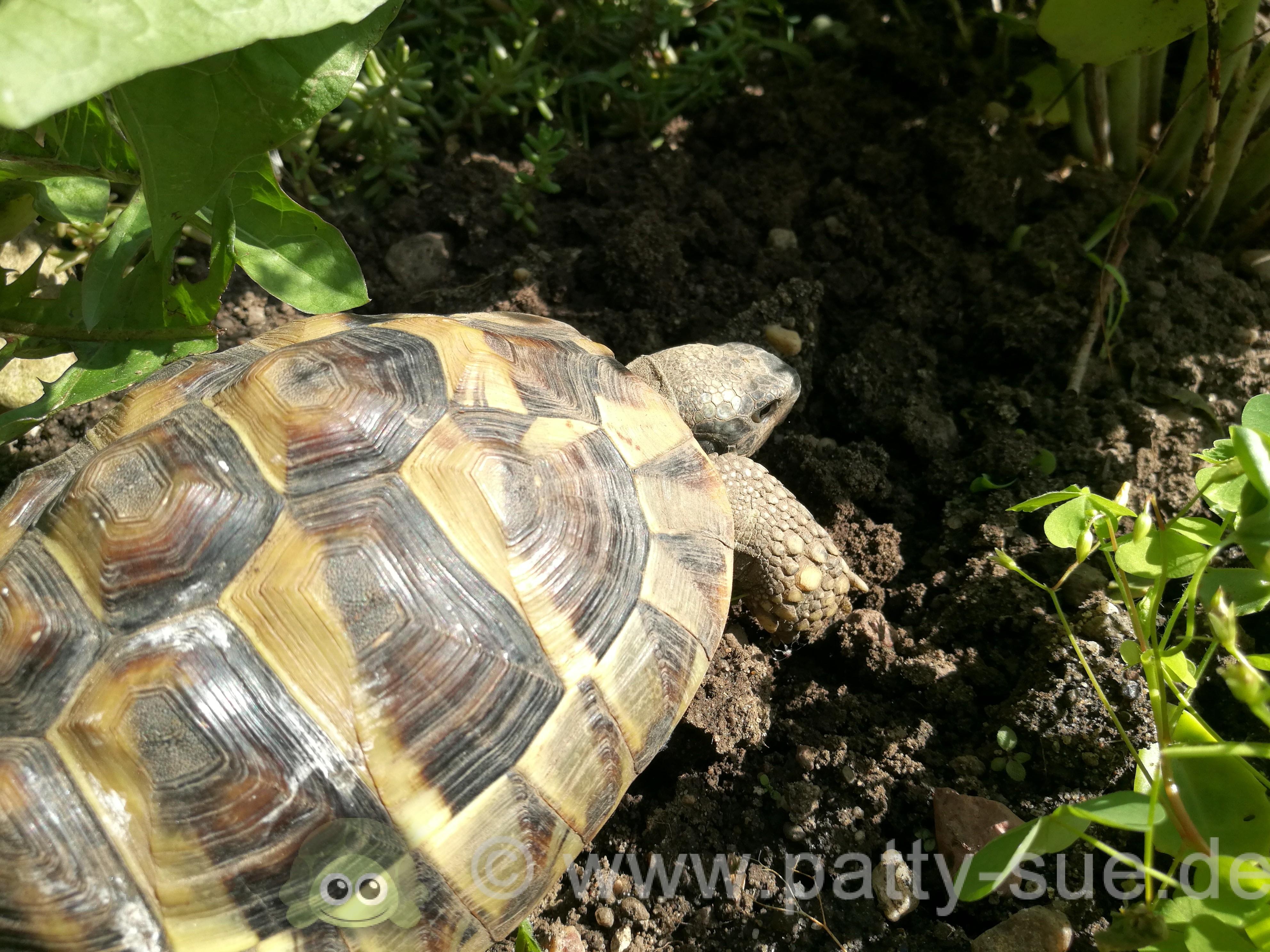 17) Schildkröten verschlafen den ganzen Tag und sind unsportlich ...