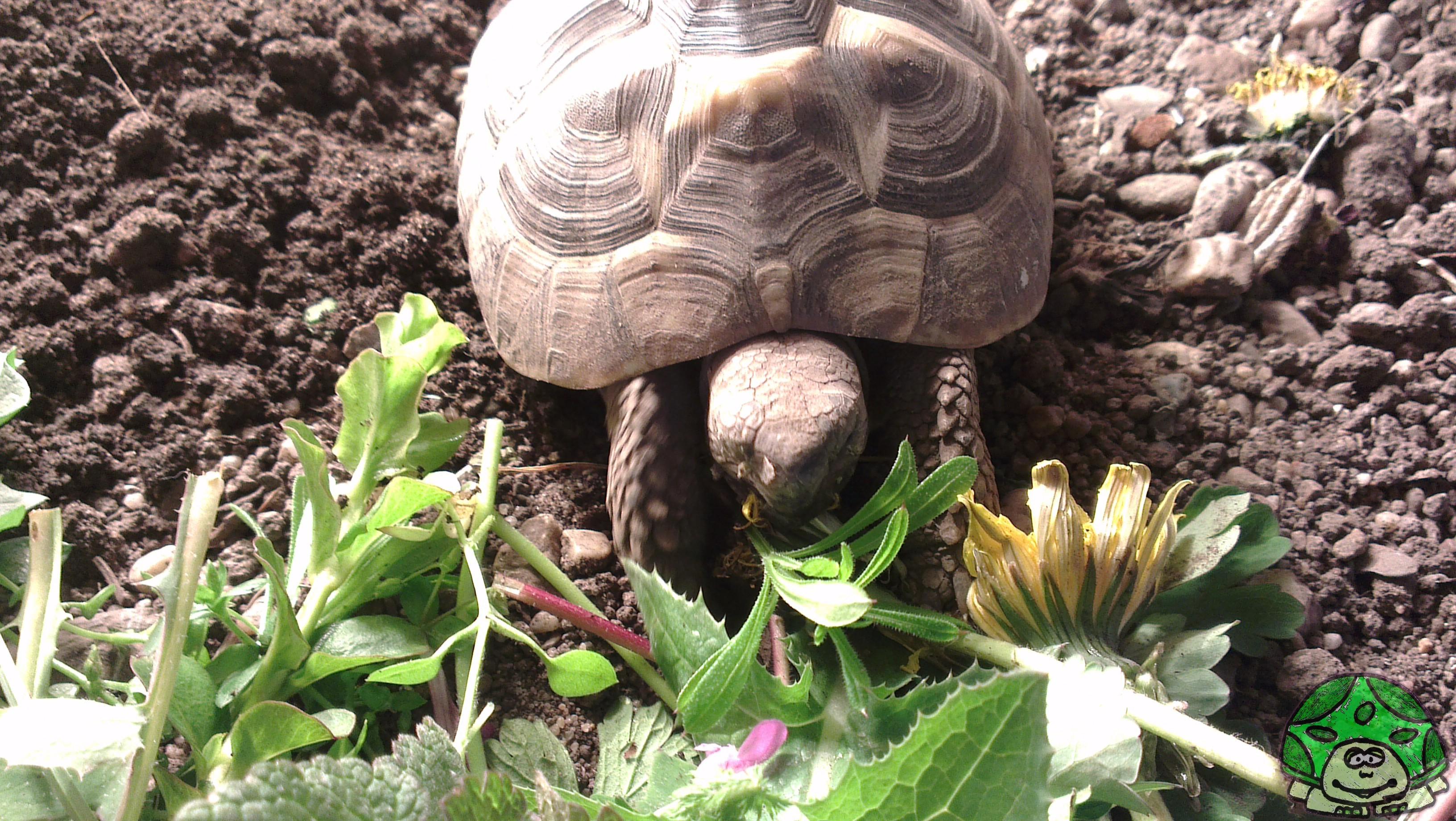 20) Schildkröten stinken - Patty Sue - DIE Schildkröte