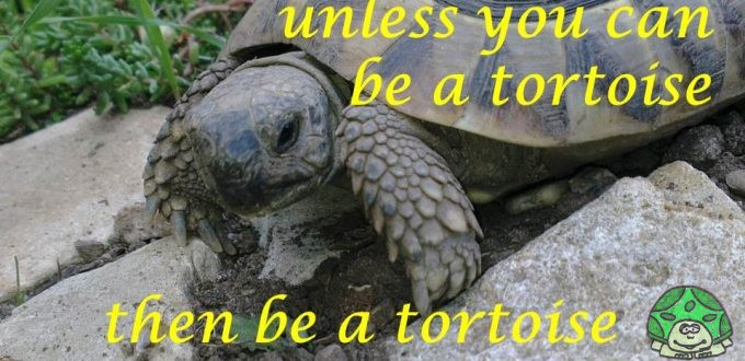 always be a tortoise