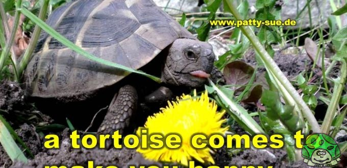 Happy Tortoise